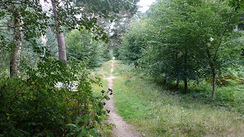 Footpath in between trees located in Chobham Place Woods.
